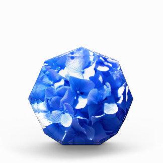 Kobalt-BlauHydrangea Auszeichnung