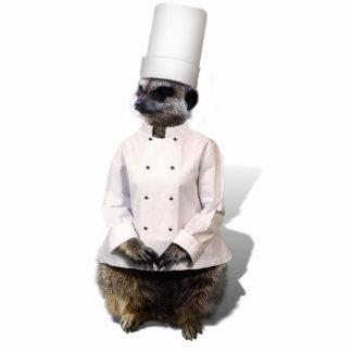 Koch Meerkat Ausschnitt
