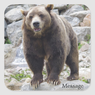 Kodiak-Bär stehend auf einem Felsen Quadratischer Aufkleber