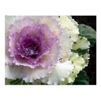 Kohl - Blume Postkarte