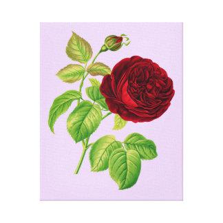 Kohl-Rose Leinwanddruck