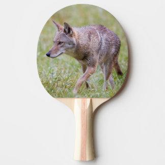 Kojote auf dem Gebiet, Cades Bucht Tischtennis Schläger