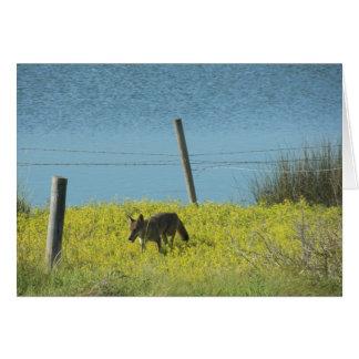Kojote-Bayou durch Leslie-Paprikaschoten Karte