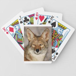 Kojote herauf nahes bicycle spielkarten