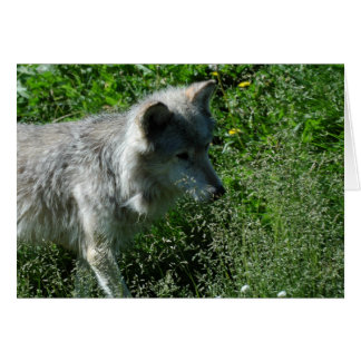 Kojote Karte