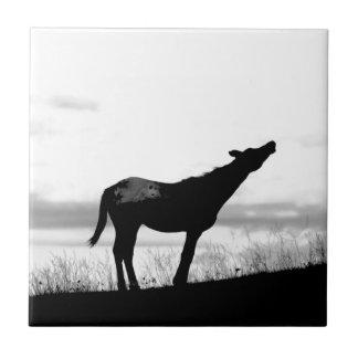 Kojote-Pferd Fliese