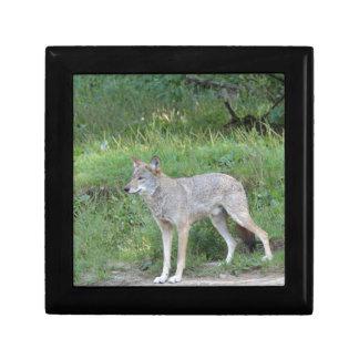 Kojote-Sammlung Erinnerungskiste
