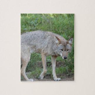 Kojote-Sammlung Puzzle