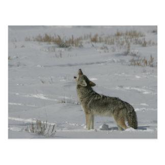 Kojote-Tier-Reihe # Postkarte 6