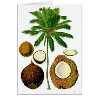 Kokosnuss-Baum-botanische Illustration Karte