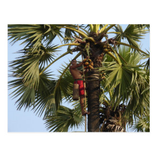 Kokosnuss-Baum Postkarte