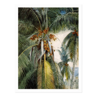 Kokosnuss-Palmen, Key West durch Winslow Homer Postkarte