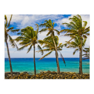 KokosnussPalmen (Cocos nucifera) herein Postkarte