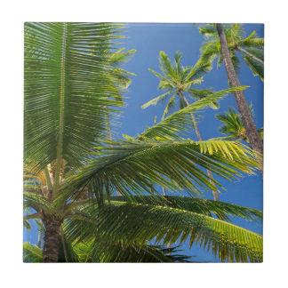 Kokosnusspalmen, Pu'uhonua O Honaunau 1 Keramikfliese