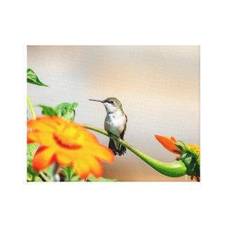 Kolibri 14x11 auf einer blühenden Pflanze Leinwanddruck