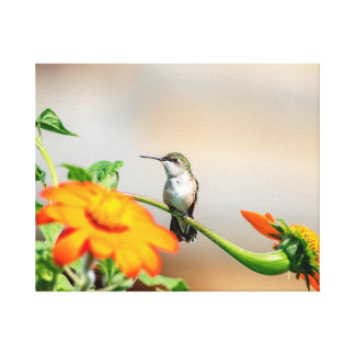 Kolibri 20x16 auf einer blühenden Pflanze Leinwanddruck
