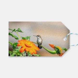 Kolibri auf einer blühenden Pflanze Geschenkanhänger