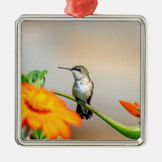 Kolibri auf einer blühenden Pflanze Silbernes Ornament