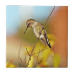 Kolibri auf Niederlassung Keramikkacheln
