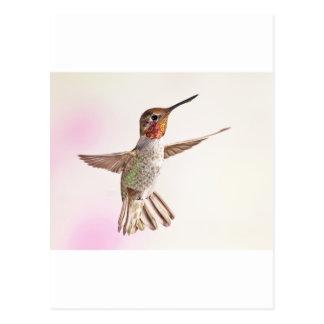 Kolibri auf Rosa Postkarte
