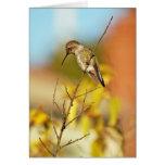 Kolibri auf Zweig Karten