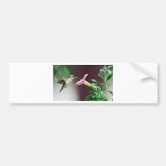 Kolibri Autoaufkleber