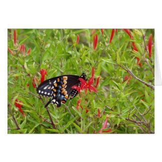 Kolibri Bush und Schmetterling Grußkarte
