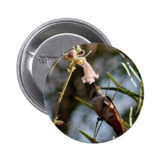 Kolibri-Frühstück Anstecknadel