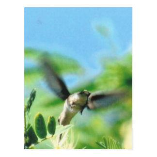Kolibri im Flug-Foto Postkarte