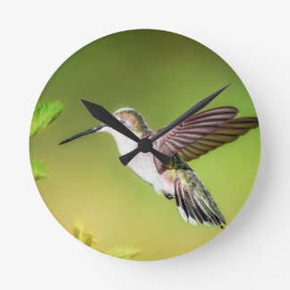 Kolibri im Flug Runde Wanduhr