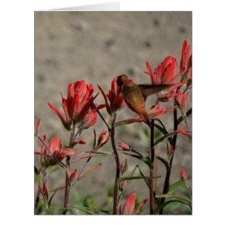 Kolibri-Kardinal flw. Karte