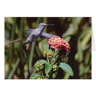 Kolibri Karte