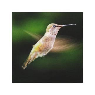 Kolibri-Leinwand-Druck Leinwanddruck