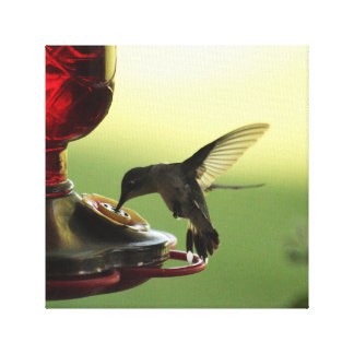 Kolibri Leinwanddruck