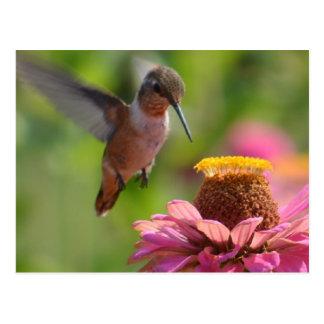 Kolibri mit Zinnias Postkarte