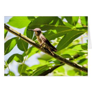 Kolibri-Mitteilungskarten, Cutomizable Karte