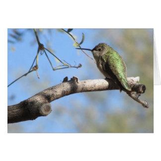 Kolibri Notecard Karte