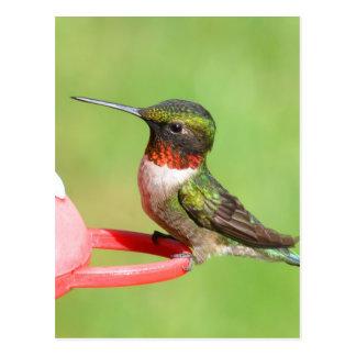 Kolibri-Postkarte Postkarte