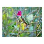 Kolibri Postkarten
