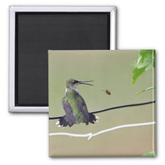 Kolibri-u. Honig-Biene Quadratischer Magnet
