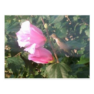 Kolibri und Rose von Sharon Postkarte