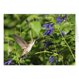Kolibri und salvia karte
