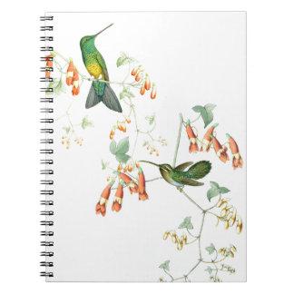 Kolibri-Vogel-Blumen-Blumentier-Tiere Notizblock
