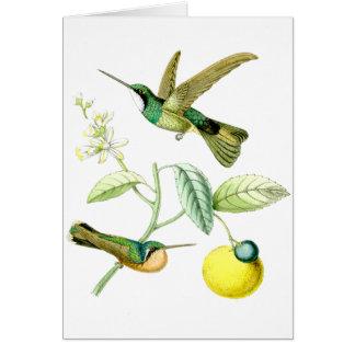 Kolibri-Vogel-Blumen-Tier-Tiere mit Blumen Karte