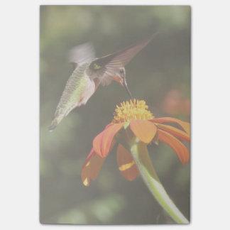 Kolibri-Vogel-Sonnenblume-Blumen-Blumengarten Post-it Klebezettel