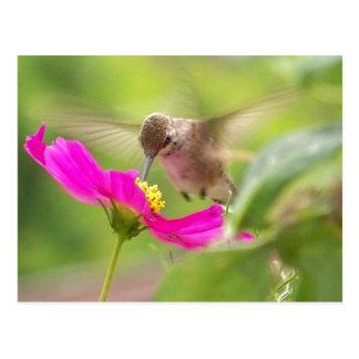 Kolibri-Vogel-Tier-Tier mit Blumen Postkarte