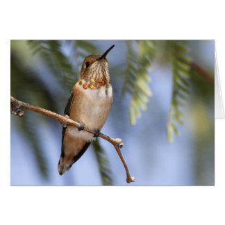 Kolibris 136 karte