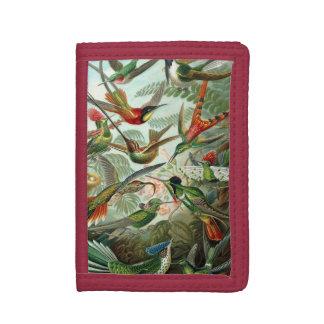 Kolibris durch Ernst Haeckel, Vintage Vogel-Bäume