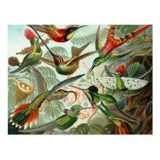 Kolibris Postkarte