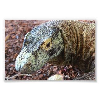 Komodo Drache Fotodruck